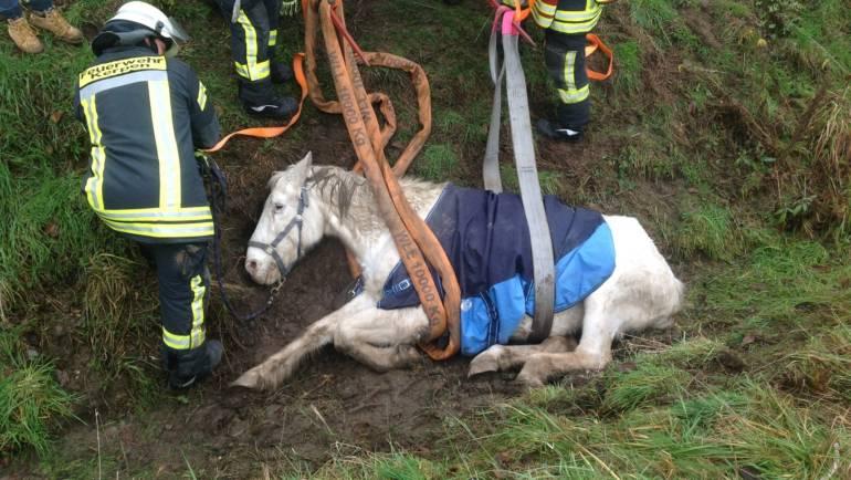 07.01.2019 – Pferd aus Graben gerettet