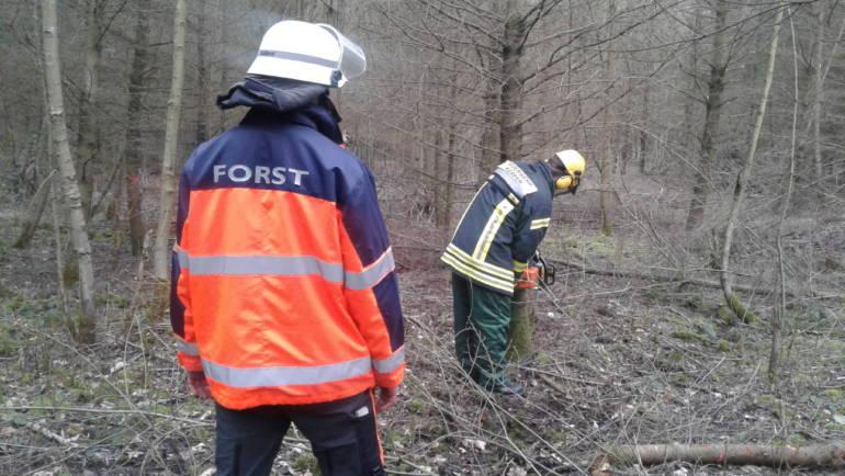 09.02.2019 – Wachunterricht im Wald – Umgang mit der Motorkettensäge gefestigt