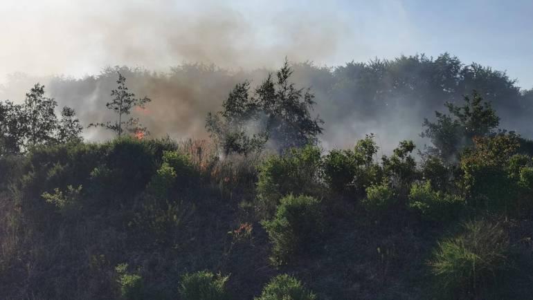 26.06.2020 – Vegetationsbrand an der Autobahn 4